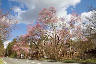 Les Cerisiers outside 2